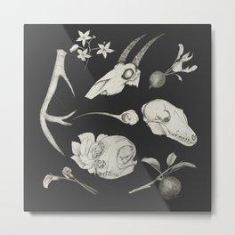 Bones and Botanical Sketches Metal Print