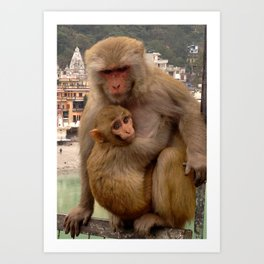Monkey Love  Art Print
