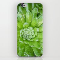 succulent iPhone & iPod Skins featuring Succulent by constarlation