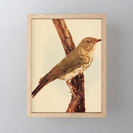 Neltje Blanchan - Bird Neighbours (1903) - Wilson's Thrush Framed Mini Art Print