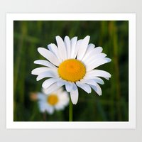 daisies Art Prints featuring Daisies by Rose Etiennette