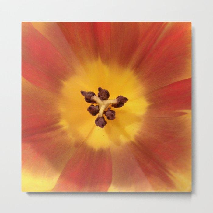 Sunny flower center Metal Print