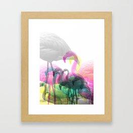 Pink Flamingos Framed Art Print