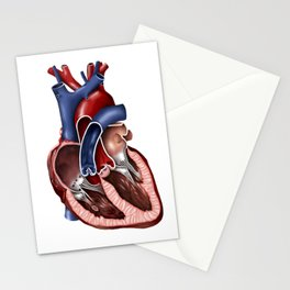 Cross section of human heart. Stationery Cards
