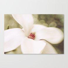 magnolia IV Canvas Print