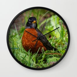 A Curious American Robin Wall Clock