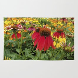 Red Echinacea standing out in a field of gold and orange Rug