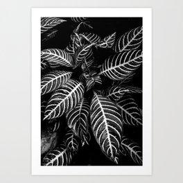 vern the fern Art Print