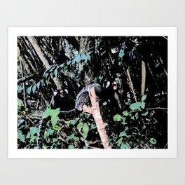 Common marmoset Art Print