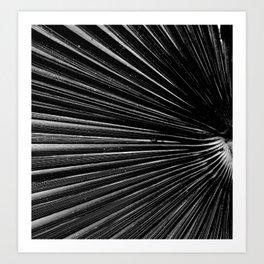 Palm ridge Art Print