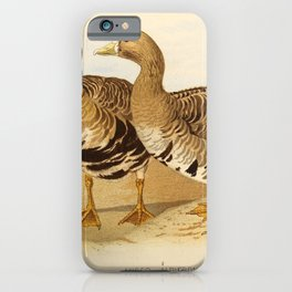 Greater White fronted Goose1 iPhone Case
