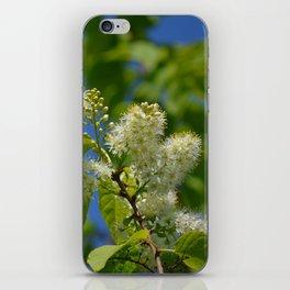 Mayday Tree in Bloom iPhone Skin