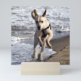 Flying Dog of Catania Beach in Sicily Mini Art Print