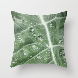 Rain water on a Purple Cauliflower leaf. Norfolk, UK. Throw Pillow