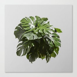 Tropical leaves monstera Canvas Print