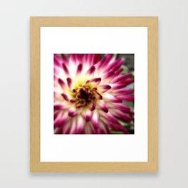 Dreamy Pink and White Dahlia Framed Art Print