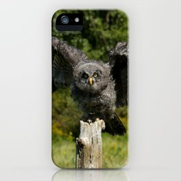 Baby Great Gray Owl iPhone Case
