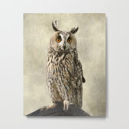 Birds Of Prey. Long Eared Owl Metal Print