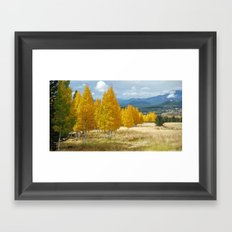 Aspens in Flagstaff Framed Art Print