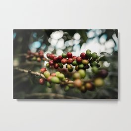 coffee cherry Metal Print