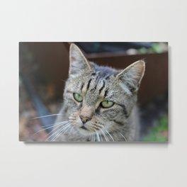 Cat stare Metal Print
