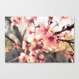 Spring has come 2 Canvas Print