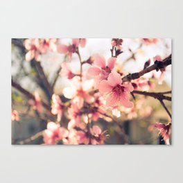 Spring has come 2 Canvas Print