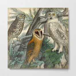 3 Owls Metal Print