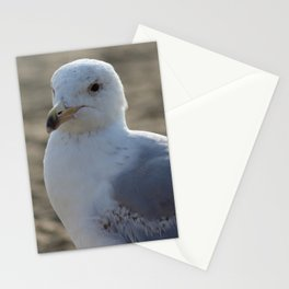 Seagull Close-up 4 Stationery Cards