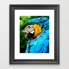 I've Got My Eye On You Framed Art Print