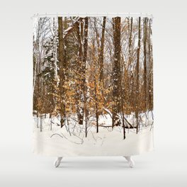 Maple Beech Forest in the Winter Shower Curtain