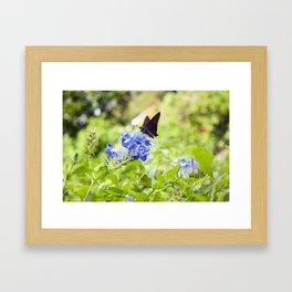 Butterfly on a Purple Flower Photography Print Framed Art Print