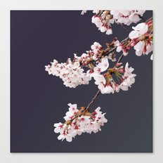 Cherry Blossoms (illustration) Canvas Print
