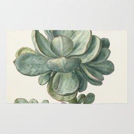 Herman Saftleven - Succulent (probably a Cotyledon orbiculata) - 1683 Rug