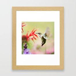 Fancy Hummingbird Framed Art Print