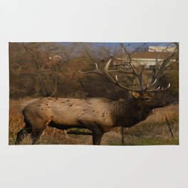 Loveland Elk Rug