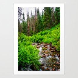 Wasatch Mountains Forest Creek Print Art Print