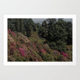 Flowers and trees Art Print