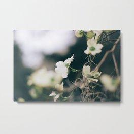 Flower Photography by Sandra Seitamaa Metal Print