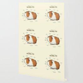 Anatomy of a Guinea Pig Wallpaper