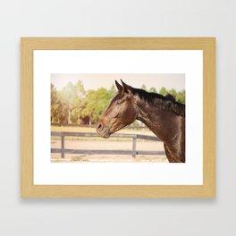 Bubba in Sunlight Framed Art Print