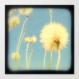 Dandelions #3 Canvas Print