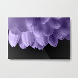 Ultra violet purple flower petals black Metal Print
