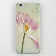 Tulipa polychroma iPhone & iPod Skin