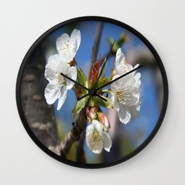 Cherry Blossom In Spring Sunlight Wall Clock