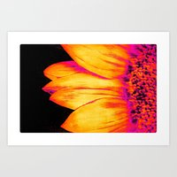 sunflower Art Prints featuring Sunflower Pink Yellow by PureVintageLove