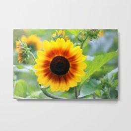 Red Yellow Sunflower Metal Print
