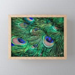 peacock IV Framed Mini Art Print