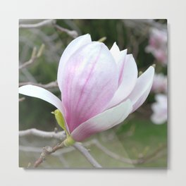Soft Magnolia Days Metal Print