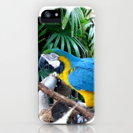 Blue Yellow Macaw. Parrot iPhone Case